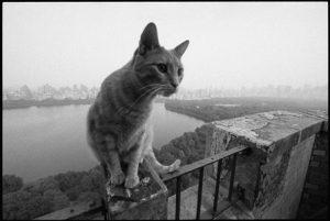 cats from a balcony